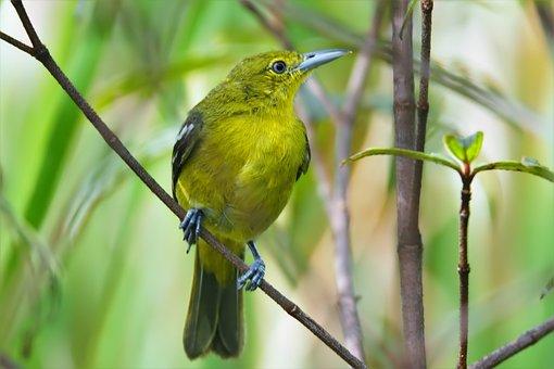 Bird, Wildlife, Nature, Outdoors, Animal, Wild, Little