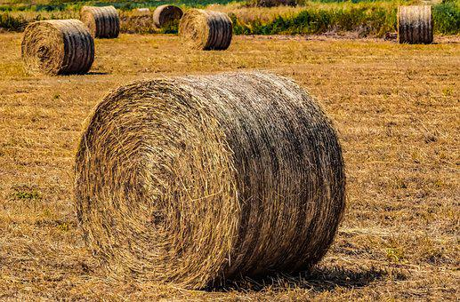 Hay, Agriculture, Straw, Farm, Rural, Nature