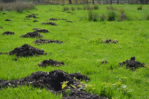 Grass, Nature, Landscape, Flora, Tree, Molehills