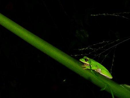 Frog, Insect, Leaf, No Crest Of The Vertebral Animals