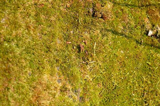 Desktop, Nature, Pattern, Grass, Soil