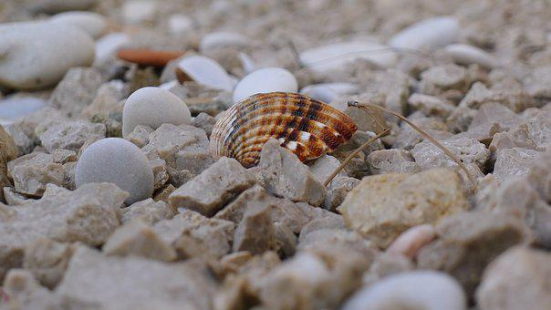 Nature, Stone, Sea, Pattern, Desktop Background, Shell