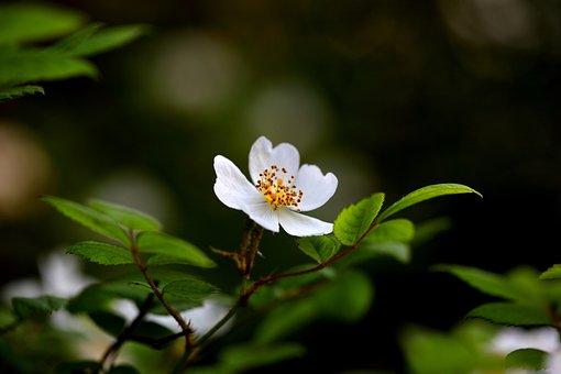 Nature, Plants, Flowers, Leaf, Stuck Under The Flower