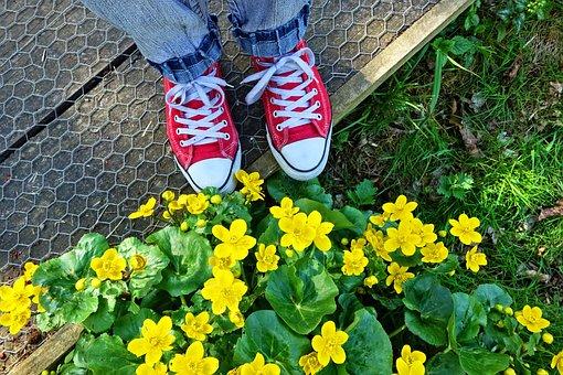 Foot, Shoe, Sneaker, Woman's Foot, Woman's Shoe