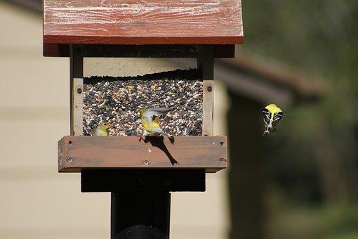 Bird Feeder, Bird, Gold Finch, Wood, Outdoors, Nature