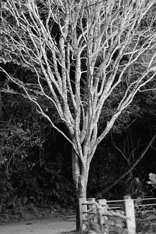 Tree, No Person, Wood, Nature, Naked, Life