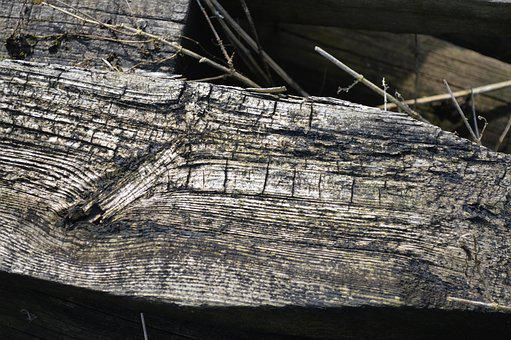 Old, Log, Wood, Fabric, Nature, Dead