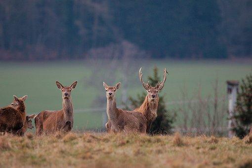 Mammal, Animal World, Nature, Grass, Hirsch, Animal