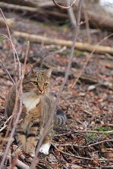 Nature, Animals, Animal Life, Outdoor, Small, Cat
