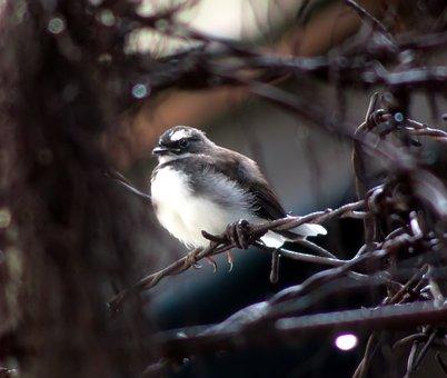 Bird, Wildlife, Nature, Animal, Outdoors, Avian, Little