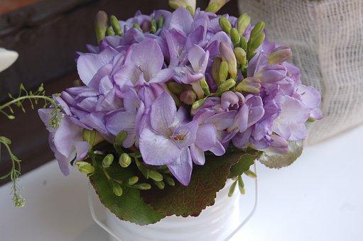 Flower, Bouquet De Fleurs, Plant, Vase, Floral