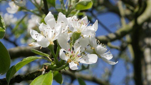 Tree, Flower, Plant, Branch, Nature, Season, Petal
