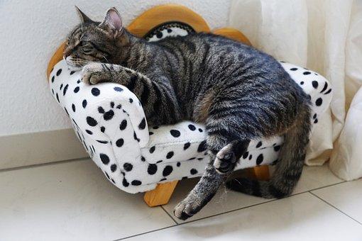 Animal, Pet, Cute, Domestic, Small, Sit, Mammal, Cat