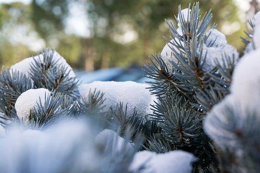 Winter, Tree, Season, Christmas, Snow, Wallpaper