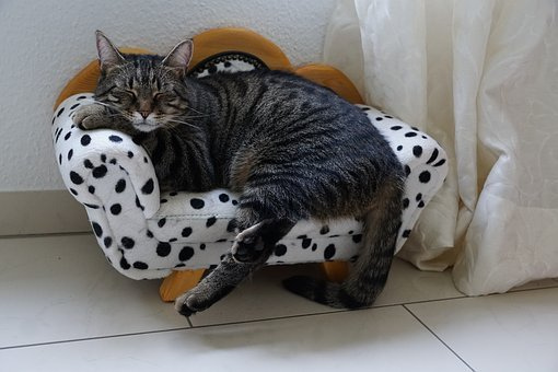 Animal, Cute, Pet, Cat, Mammal, Domestic, Small, Sit