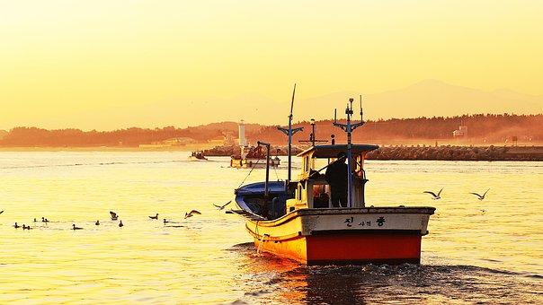 Sea, Ship, Dawn, Gangneung, Seagull