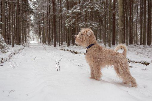 Dog, Forest, Still, Stand, Animal, Snow, Winter, Cold