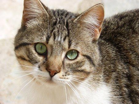 Feline, Foreground, Feline Look, Nice, Animalia, Cat