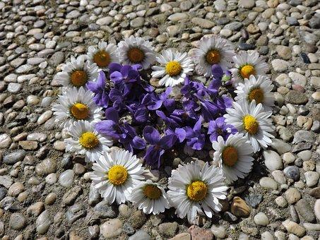 Violet, Daisy, Heart, Close, Spring, Stone Floor