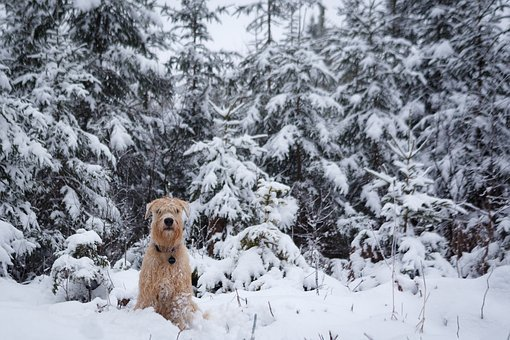Dog, Snow, Winter, Frost, Cold, Frozen, Season, Ice