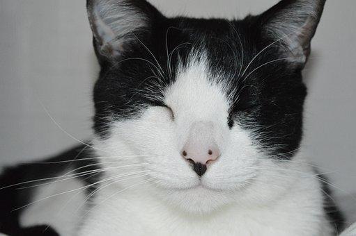 Pet, Animal, Cat, Cute, Mammal, Relaxed, Kitten, Feline
