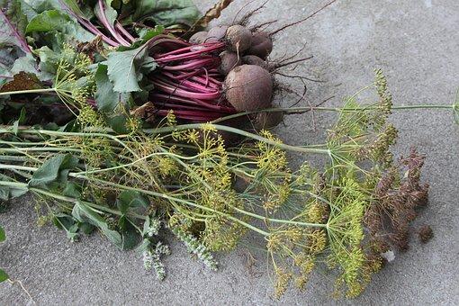 Nature, Plant, Eating, Leaf, Burak, Koper, Red Burak
