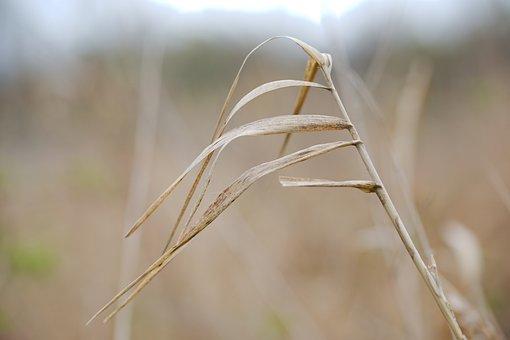 Nature, Grass, Growth, Plant, Field, Leaf, Schönwetter