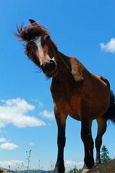 Mammals, Animals, Mane, Nature, Horse, Sky