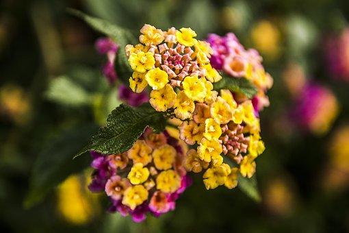 Flower, Nature, Plant, Leaf, Garden, Summer, Floral