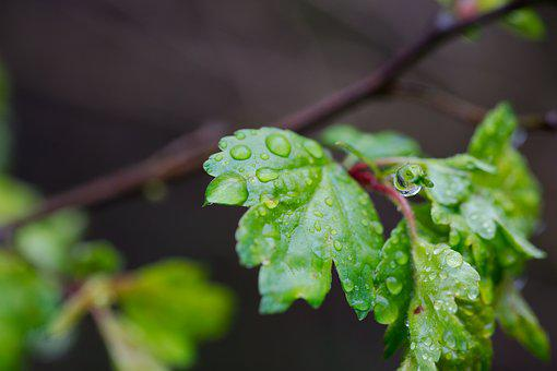 Leaf, Plant, Nature, Growth, Garden, Rain, Close, Color