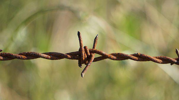 Barbed Wire, Nature, Outdoor, Tree, Security, Plant