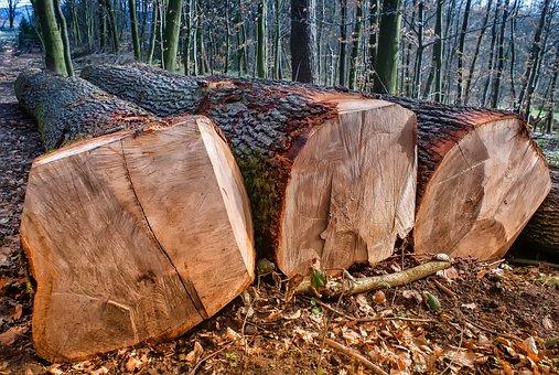 Nature, Wood, Tree, Tribe, Log, Sawn, Like, Lying