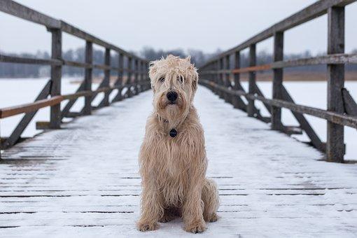 Dog, Animal, Canine, Bridge, Sit, Water, Outdoors