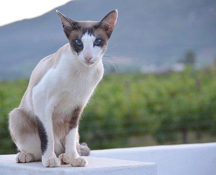 Cute, Animal, Cat, Sit, Pet