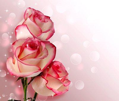 Flower, Rose, Petal, Romance, Love, Birthday, Wedding
