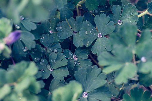 Plant, Leaf, Natural, Flowers, Shizuku, Drop Of Water