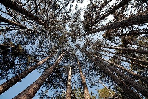 Tree, Wood, Nature, Landscape, Pine, Sky, Season