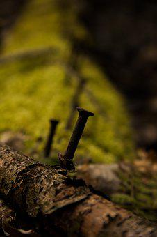 Nature, Autumn, Wood, Tree, Leaf, Nail, Moss, Spring