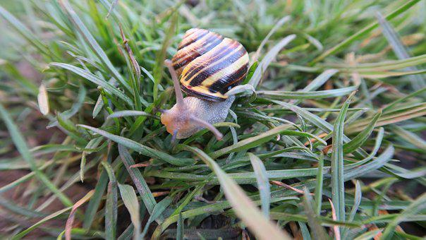 The Sight Of A Snail, Spring, Garden