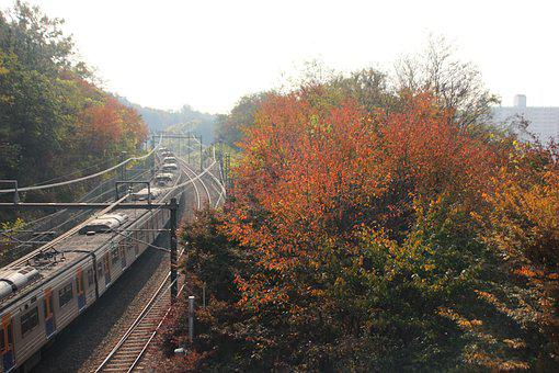 Autumn, Nature, Wood, Leaf, Travel, Train, Subway