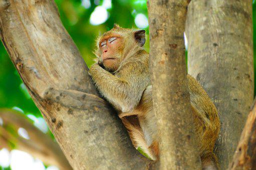 Monkey, Wildlife, Primate, Nature, Tree, Animal, Mammal