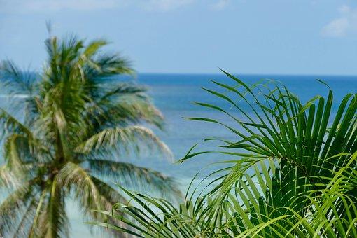 Tropical, Summer, Nature, Beach, Sand, Palm, Island