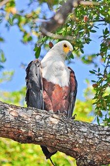 Bird, Nature, Wildlife, Animal, Wild, Outdoors, Tree