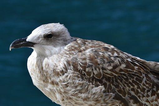 Bird, Animal World, Nature, Animal, Wing, Sea, Bill