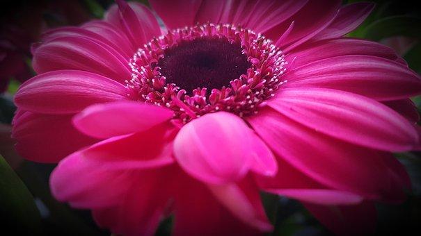 Flower, Nature, Plant, Color, Summer, Beautiful, Garden