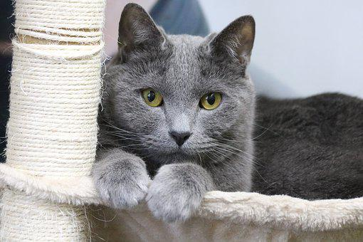 Animal, Domestic Of, Cute, Cat, Pet