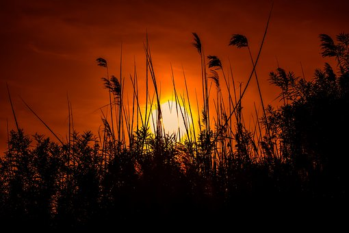 Sunset, Sun, Dusk, Silhouette, Evening, Nature, Reeds