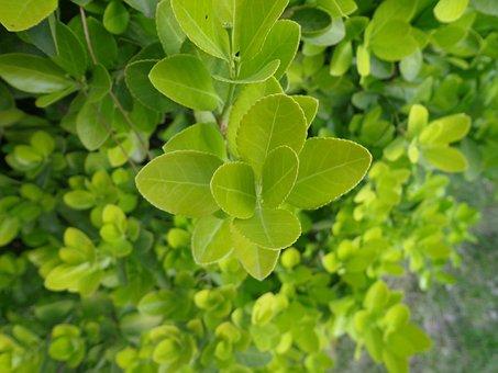 Sheet, Plant, Nature, Shoots, Freshness, Environment