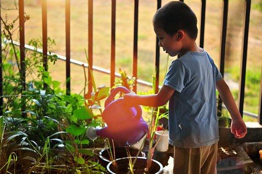 Tree, Watering, Child, Planting, Garden