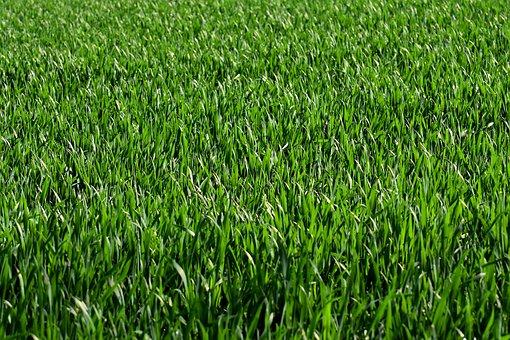 Meadow, Field, Grass, Green, Nature, Landscape